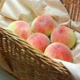 Peach_0386
